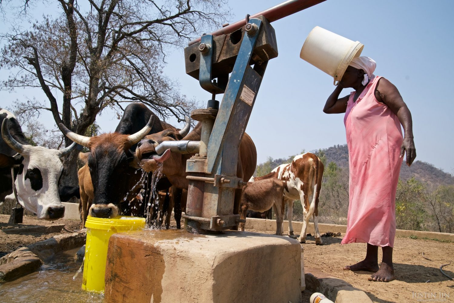 A woman and her cattle drink by a borehole in drought-hit Masking Province, Zimbabwe. Drought in southern Africa is devastating communities in Zimbabwe, leaving 4 million people urgently in need of food aid. The government declared a state of emergency,. Here in Masvingo Province, the country's hardest hit province, vegetation has wilted, livestock is dying, and people are at serious risk of famine. Pictures shot by Justin Jin